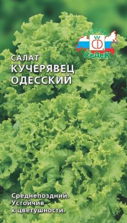 Салат кучерявец одесский выращивание из семян 12